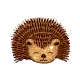 -_-Hedgehog.png